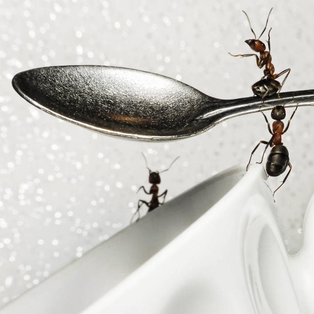Formigas na cozinha? Saiba como acabar com isso!