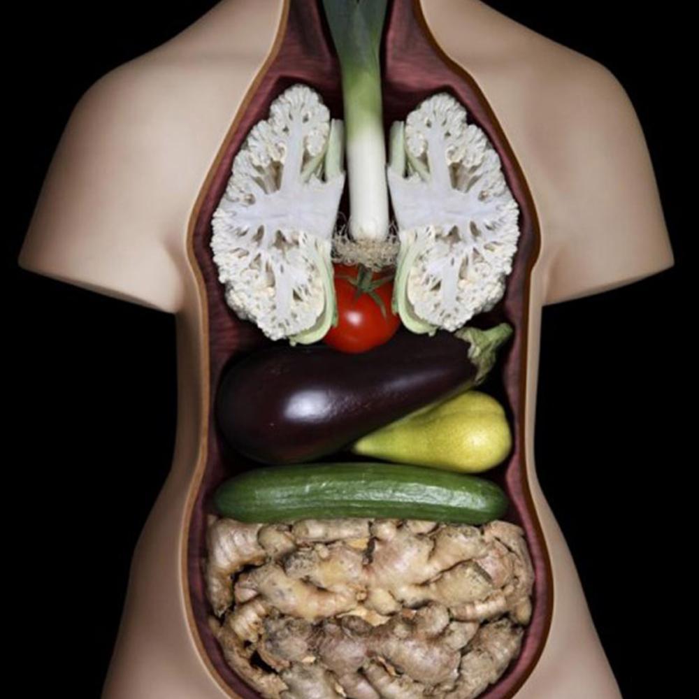 A aparência dos alimentos é igual aos órgãos que eles curam!